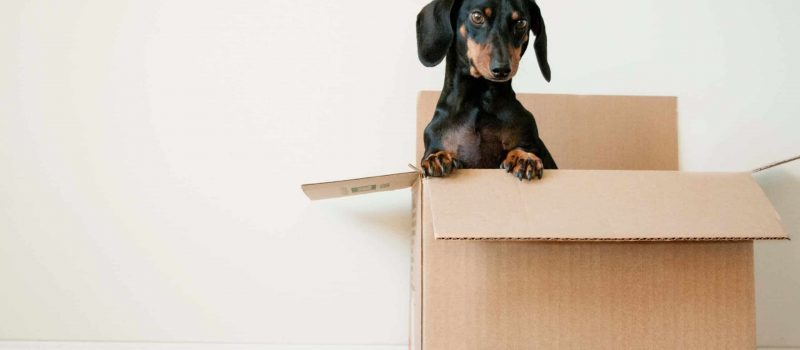 can't afford to move out? here are some tips